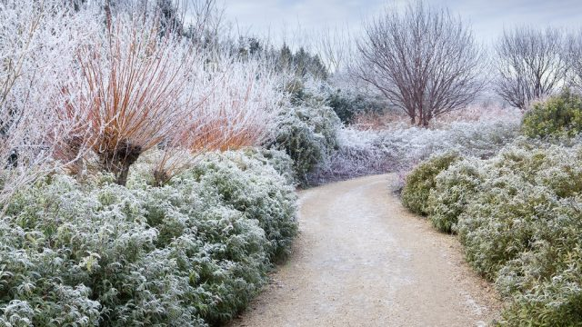 Winter Landscaping Ideas