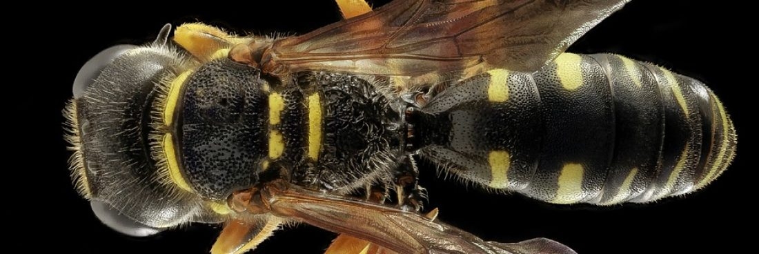 Ways to Get Rid of Wasp Nests