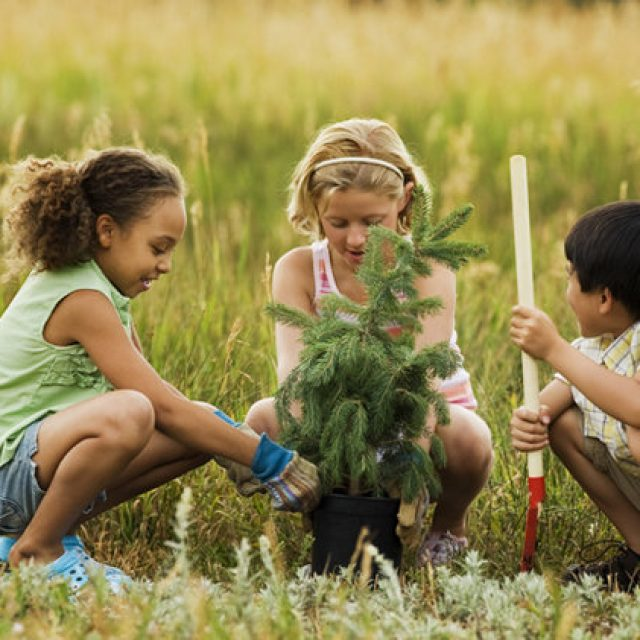Ecological awareness: teaching kids about environmental protection