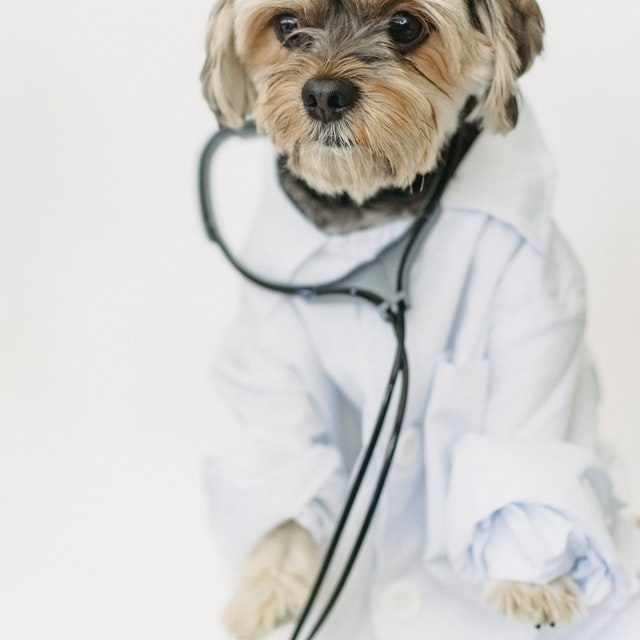 Is your dog scared of the vet? Here's what to do