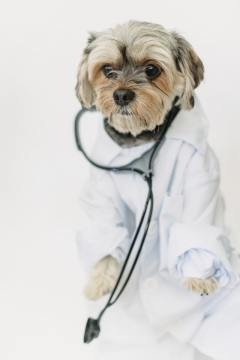 Is-your-dog-scared-of-the-vet