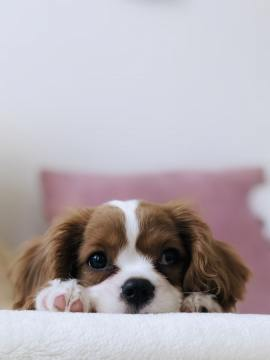 Tips-to-prepare-your-home-to-help-your-new-dog-feel-comfortable