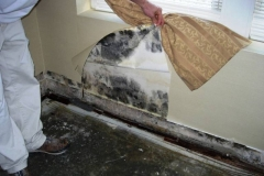 When you should resort to the services of mold removal companies