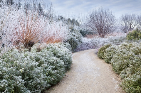 Winter Landscaping Ideas Picture